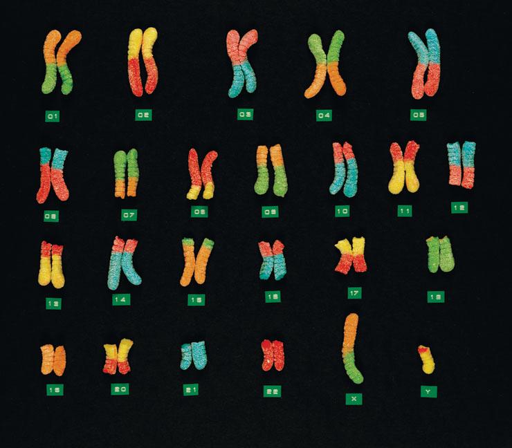 chromosomesweb