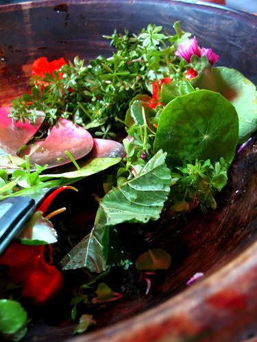 salad made from foraged foods