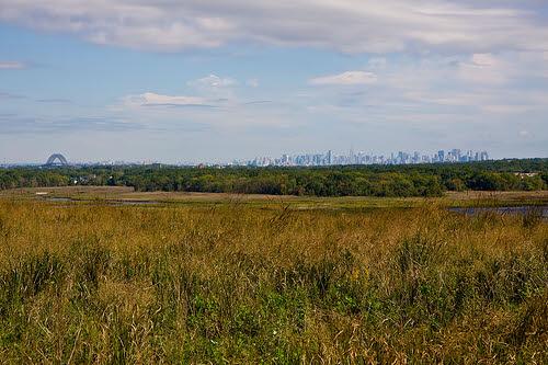 freshkills park skyline